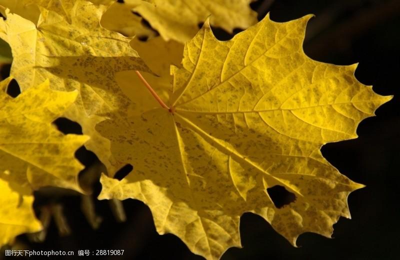 多彩的树木秋叶