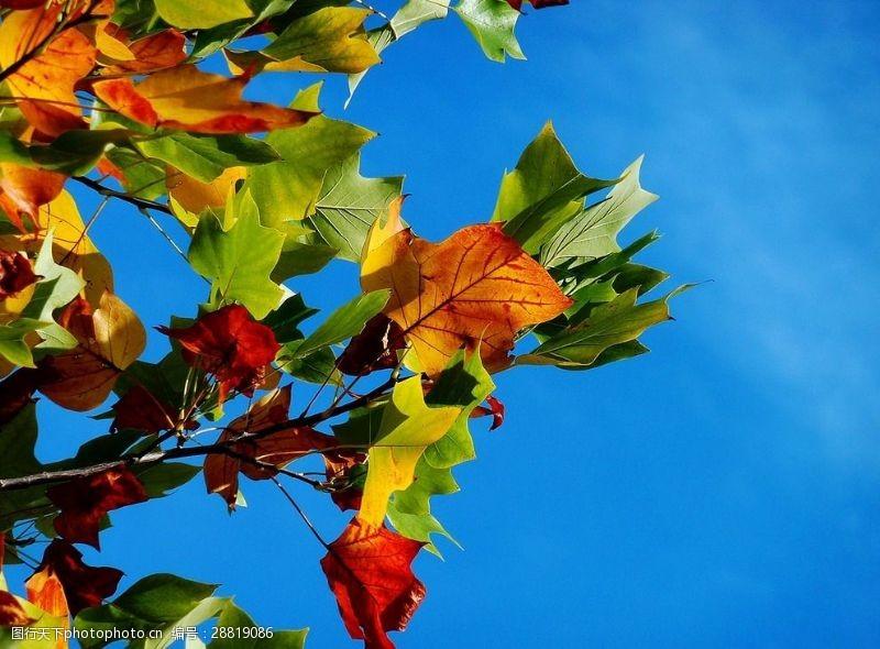 多彩的树木秋叶蓝天