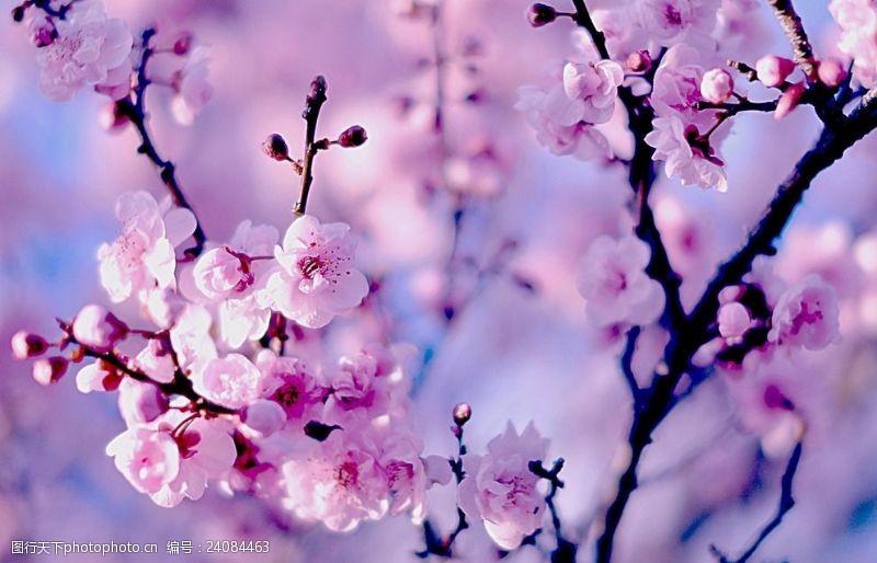 三月桃花开三月桃花