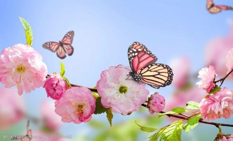 三月桃花开桃花蝴蝶春天