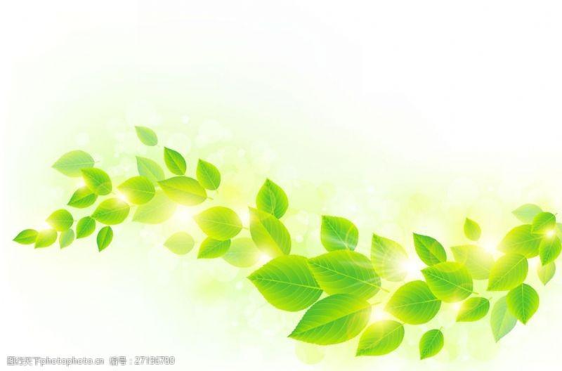 春意浓浓发光绿叶