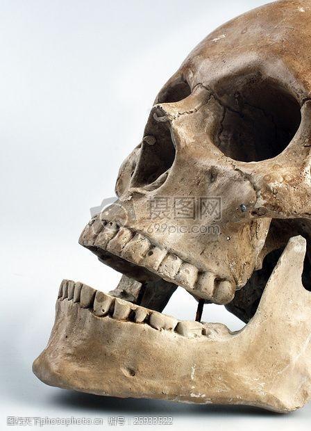 medical人类头骨白色背景