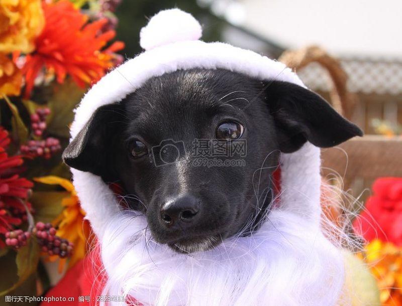 圣诞老人套装三项赛和秋季狗照片113.JPG