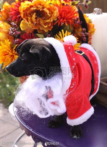 圣诞老人套装三项赛和秋季狗照片128.JPG