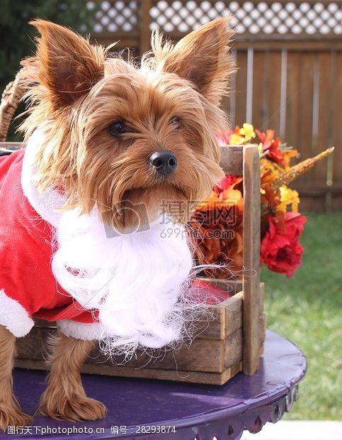 圣诞老人套装三项赛和秋季狗照片094.JPG