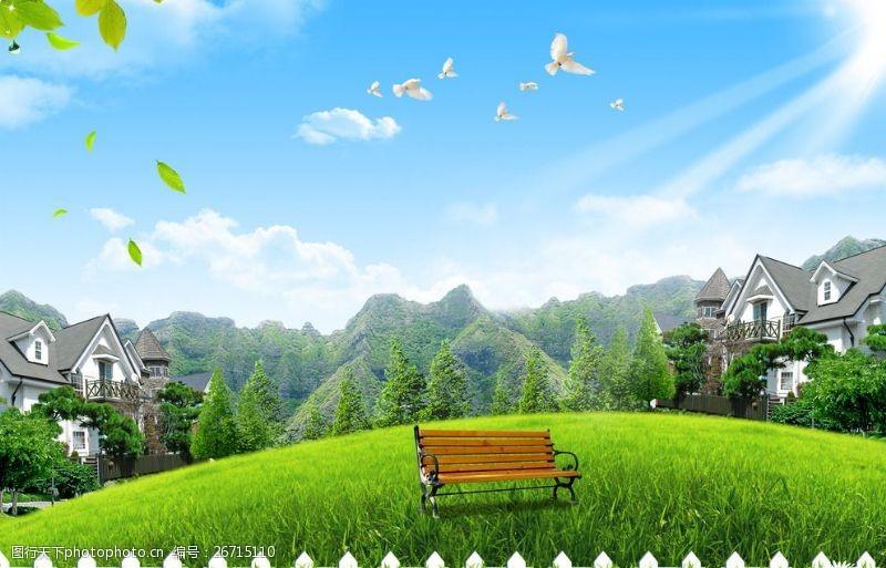 鸽子蓝天草地