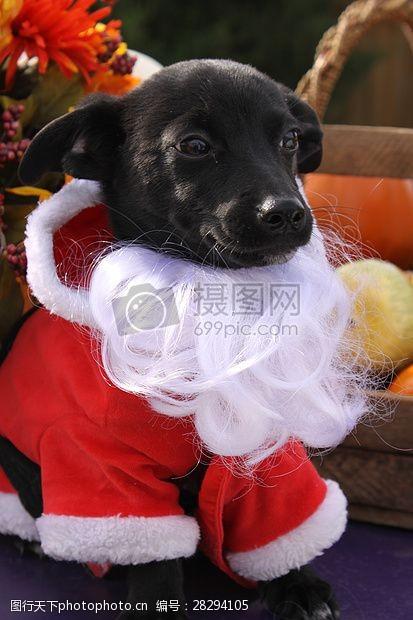 圣诞老人套装三项赛和秋季狗照片105.JPG