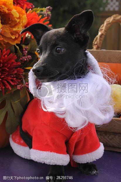圣诞老人套装三项赛和秋季狗照片108.JPG