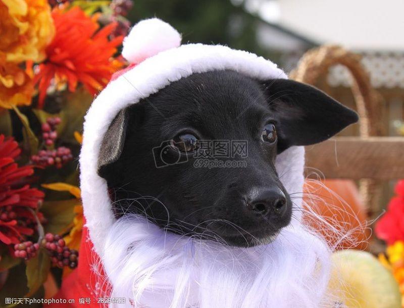 圣诞老人套装三项赛和秋季狗照片114.JPG
