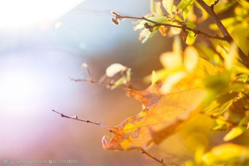 树叶图片免费下载唯美树叶图片