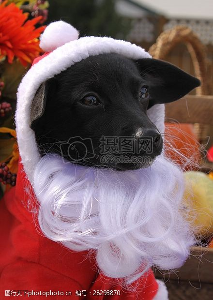 圣诞老人套装三项赛和秋季狗照片117.JPG