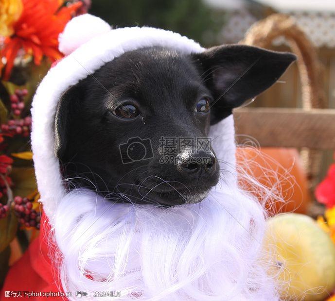 圣诞老人套装三项赛和秋季狗照片121.JPG