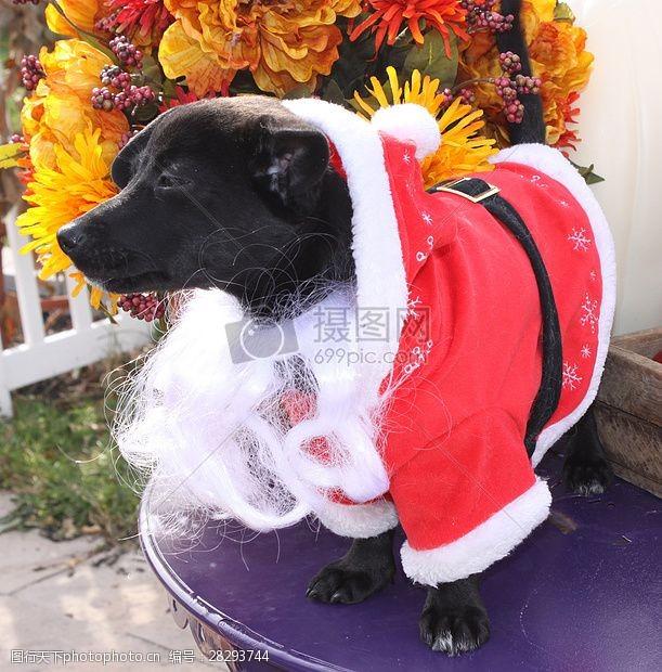 圣诞老人套装三项赛和秋季狗照片131.JPG