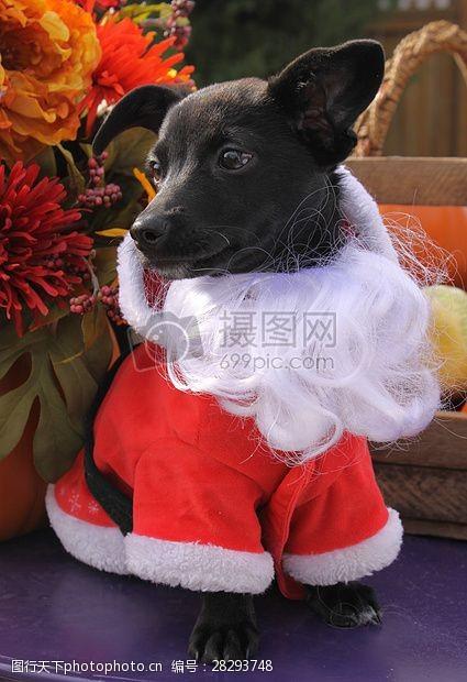 圣诞老人套装三项赛和秋季狗照片109.JPG