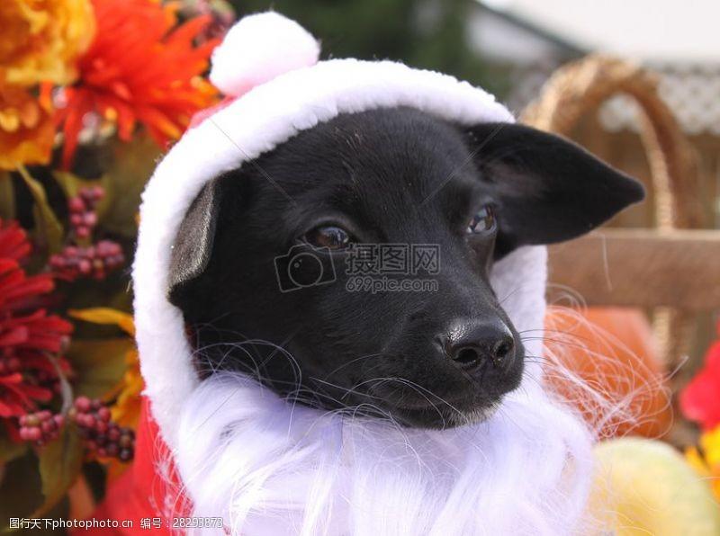 圣诞老人套装三项赛和秋季狗照片115.JPG