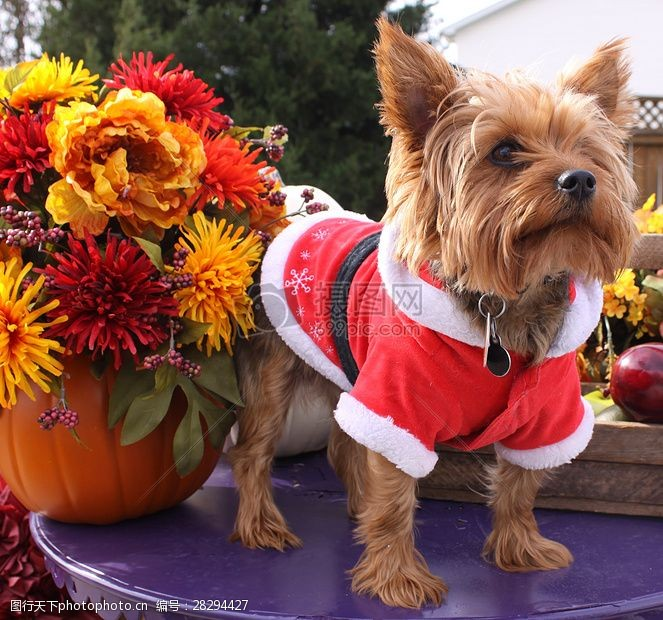 圣诞老人套装三项赛和秋季狗照片085.JPG