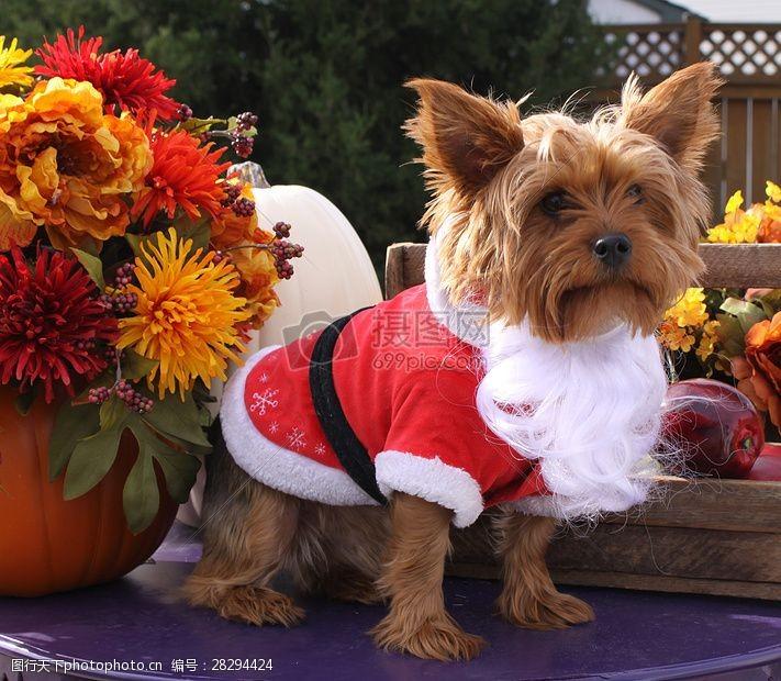 圣诞老人套装三项赛和秋季狗照片092.JPG
