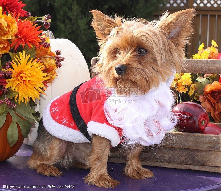 圣诞老人套装三项赛和秋季狗照片090.JPG