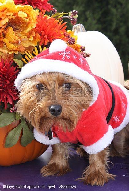 圣诞老人套装三项赛和秋季狗照片077.JPG