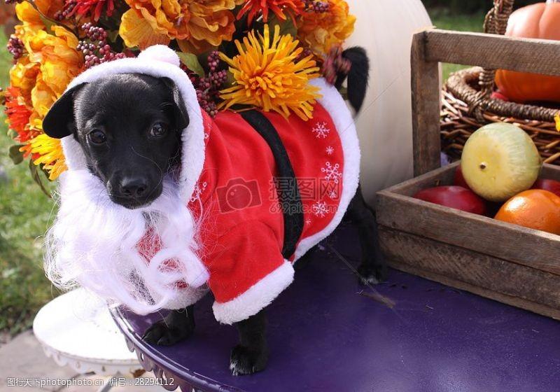 圣诞老人套装三项赛和秋季狗照片125.JPG