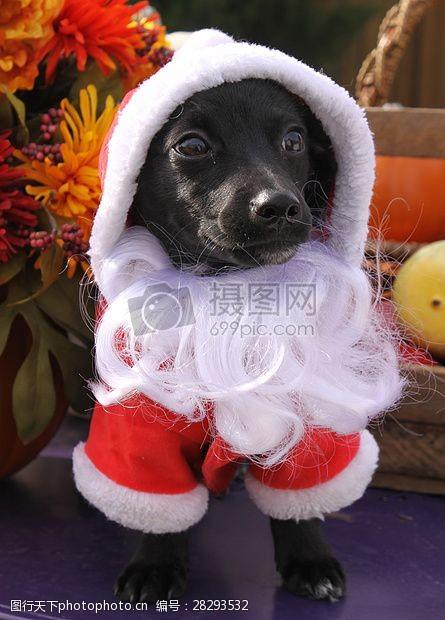 圣诞老人套装三项赛和秋季狗照片098.JPG