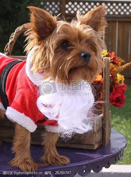 圣诞老人套装三项赛和秋季狗照片097.JPG