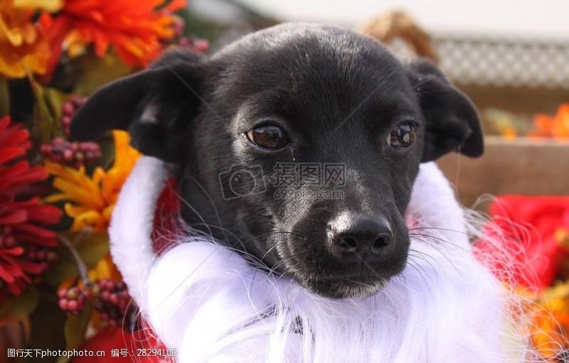 圣诞老人套装三项赛和秋季狗照片103.JPG