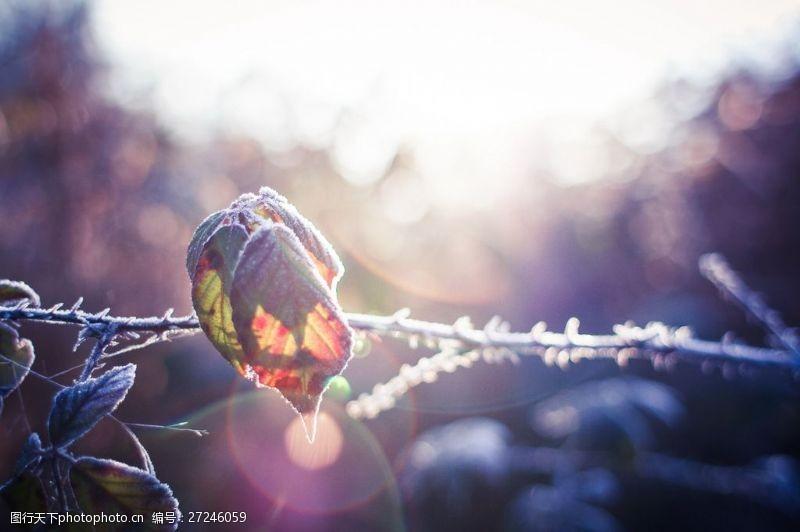 树叶图片免费下载冬天的树叶图片