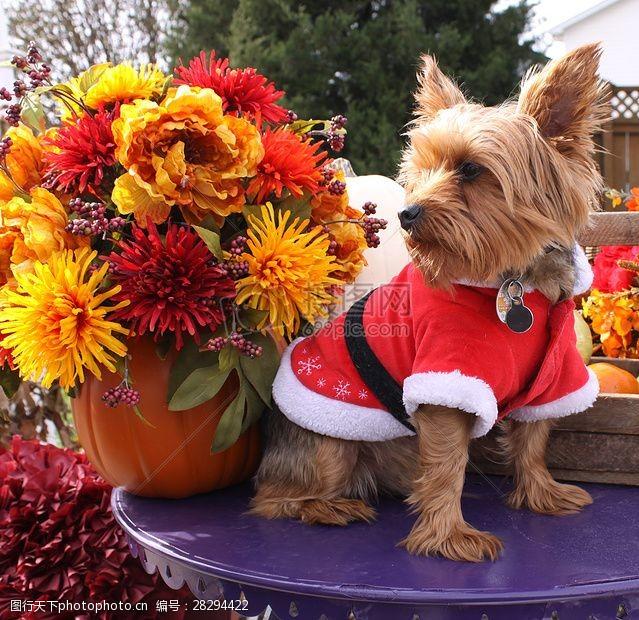 圣诞老人套装三项赛和秋季狗照片084.JPG