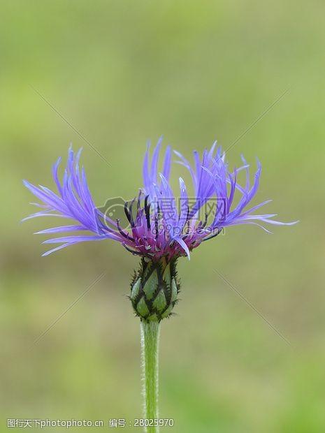 复合材料美丽的紫色小花