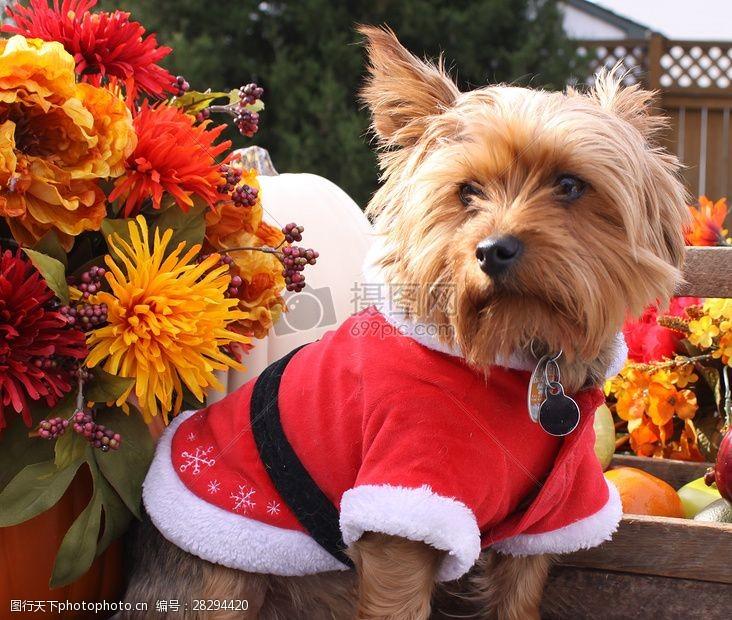 圣诞老人套装三项赛和秋季狗照片081.JPG