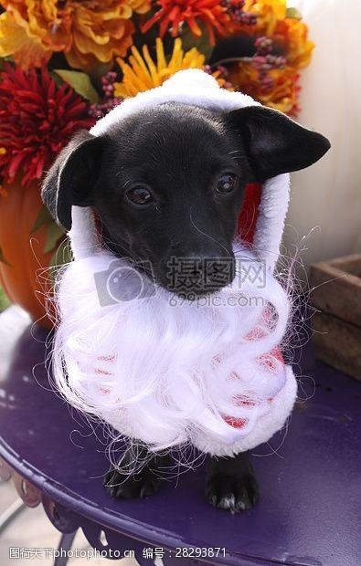 圣诞老人套装三项赛和秋季狗照片127.JPG