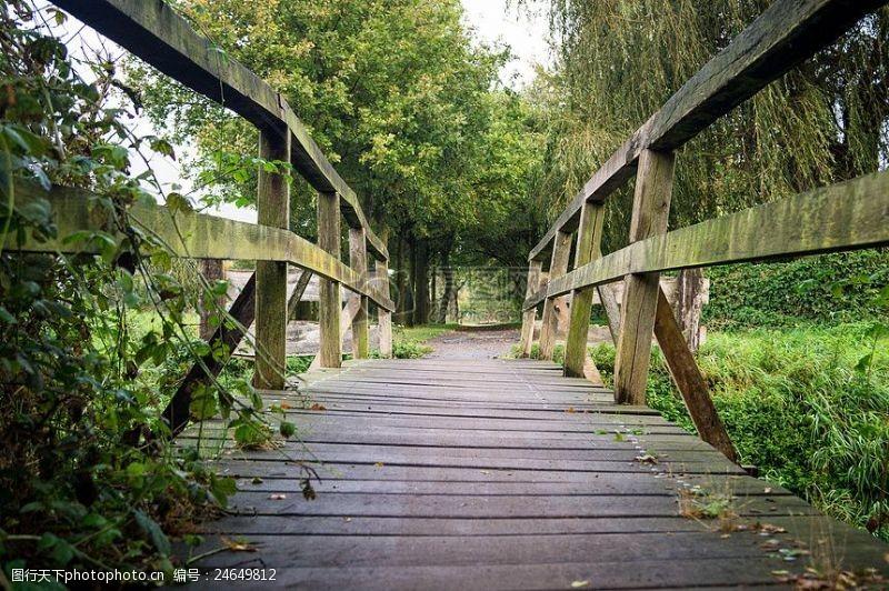 绿色的木头桥