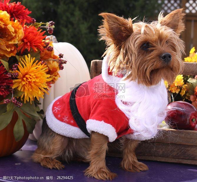 圣诞老人套装三项赛和秋季狗照片089.JPG