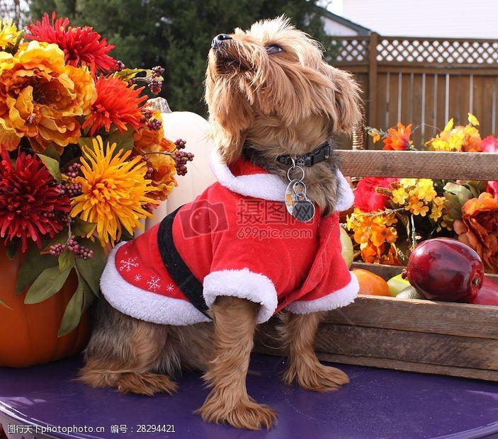 圣诞老人套装三项赛和秋季狗照片082.JPG